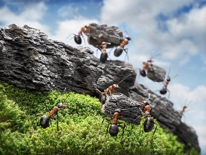 O que podemos aprender sobre colaboração com as formigas? - MJV Tecnologia & Inovação